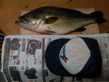 """4.6lb, 20"""" largemouth  Newmarket,Ont, Canada!"""