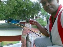 Mangrove Jack..Munampam Kerala