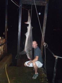 mediterranean shark?