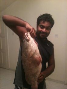 nice 7 kg hamoor