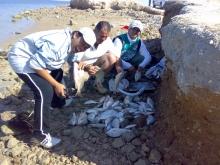Nagroor Fish