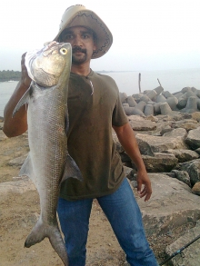 Threadfin Salmon,Cochin, India