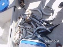 October 28, 2011 fishing trip Dubai