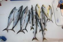 Good fishing day in Dubai