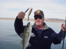 6lb striper large lure on winter downrig