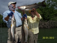 snook fever