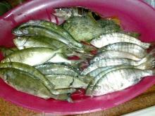 some good fish