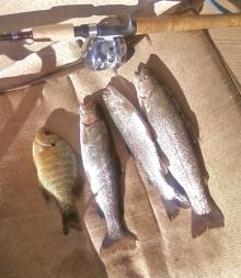 morning catch 2/22/12