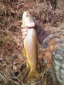 brown trout balt.,md
