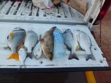 A great fishing night inland sea Udaid Qatar