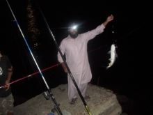 Cat fish caught in meseela (kuwait).
