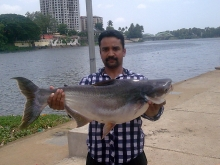 20 POUND GIANT MEKONG CAUGHT ON 3LB MONOLINE WITH 18 SIZE HOOK FROM ALUVA PERIYAR,COCHIN,INDIA