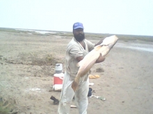 Ringgarr Fish