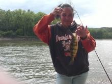 Perch, Mohawk River, Malwyck Park, Schenectady NY