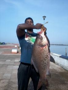 16kg Rohu(munambam beach ,kerala)