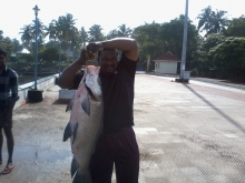 16 kg Rohu(munambam beach,kerala)