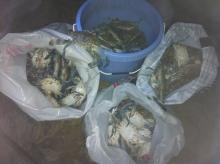 Nov. 08-2012 Crabbing @ ?_____- 8:00pm
