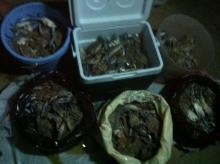 Nov. 08-2012 Crabbing @ Abu dhabi- 9:00pm