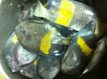 Nov.09-2012-fishing-Abu dhabi.3