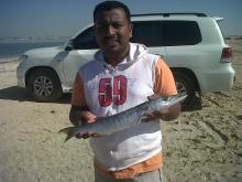 Barracuda small one