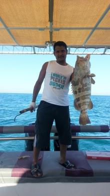 fishing in abu dhabi-hammour