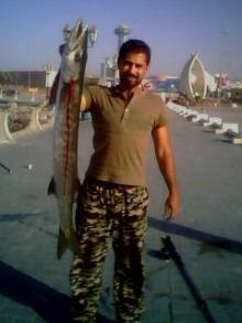 catching barracuda in abu dhabi