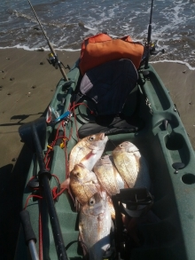 Auckland Summer Snapper Fishing
