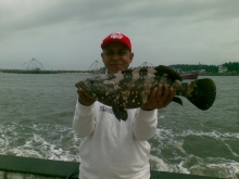 grouper from munambam, kerala