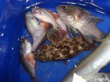Kushimoto, Wakayama shore fishing