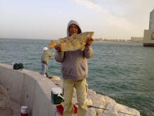 early morning catch in corniche,doha