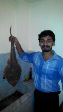 Stingray Landed From From Vypin