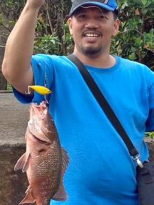 mangrove jack 1.3kls @ daet river