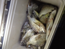box full of Sea Bream
