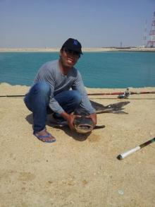 Cobia caught in Al Khor
