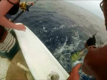 Roatan White Marlin Catch and Released