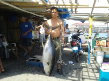 40 kg. yelow fin tuna