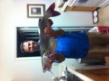 California catfish