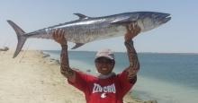 kingfish 15.64 kls