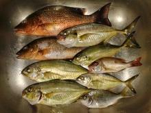 Rod & Reels fishing with Shrimp & Herring