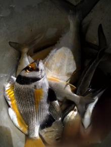 my catch at al murjan island dammam cornech