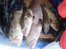Marina Mall Breakwater Fishing 28Nov2014