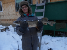 icefishing for whitefish got a pike