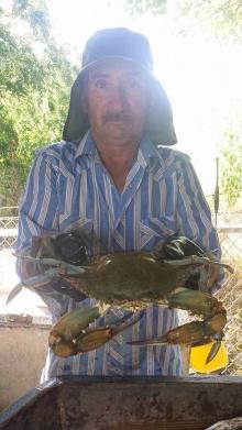 Big ole Blue Crab