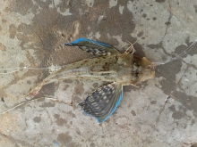 Unidentified fish caught today in Chaguaramas 30/03/2015