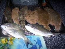 A few fish