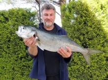 4.5Kg Blue Fish