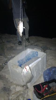 2 fishes . 28.05.2015 @Al khobar K.S.A. night 1:37 AM