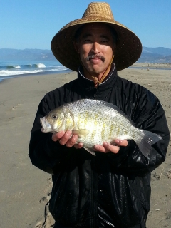 Record Surfperch