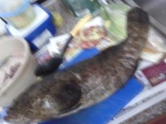 Marina Mall Breakwater Fishing...06June2015