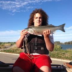 Striper. From delta Sacramento River ca